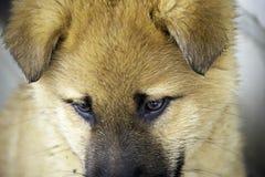 Het puppy zit door de muur stock afbeeldingen