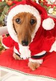 Het puppyhond van de Kerstmiskerstman Royalty-vrije Stock Foto