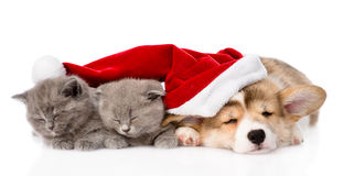 Het puppyhond van slaappembroke welsh corgi met santahoed en katje twee Geïsoleerd op wit Stock Afbeelding