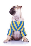 Het puppyhond van zwabbers met gedraaid hoofd Royalty-vrije Stock Foto