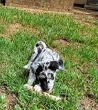 Het puppyleven stock foto