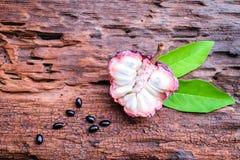 Het purpere fruit van de vlaappel Stock Foto's