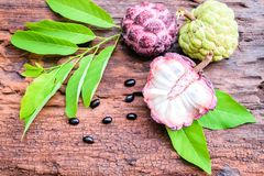Het purpere fruit van de vlaappel Stock Afbeelding