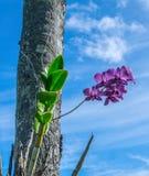 Het purpere Orchidee Groeien in Hawaï stock afbeelding
