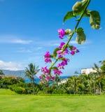 Het purpere Orchidee Groeien in Hawaï royalty-vrije stock foto