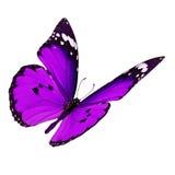 Het purpere vlinder vliegen stock foto