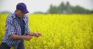 Het Raapzaadbloesem van landbouwersexamining and smelling bij Gebied stock videobeelden