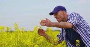 Het Raapzaadbloesem van landbouwersexamining and smelling bij Gebied stock video