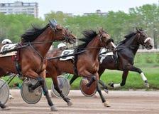 Het ras van de drie paardendraver in de motiezomer Stock Afbeelding