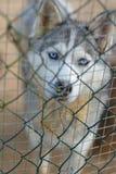 Het ras van de hond zit bij cel stock afbeeldingen