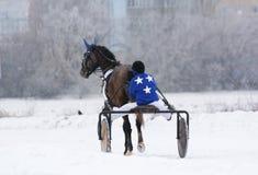 Het ras van de paarddraver in de winter Achter mening Stock Afbeeldingen