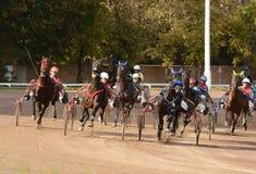 Het ras van de paardendraver in motie Stock Foto's