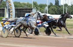 Het ras van de paardendraver in motie Royalty-vrije Stock Foto