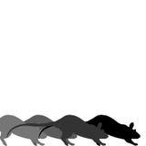 Het ras van de rat Stock Fotografie