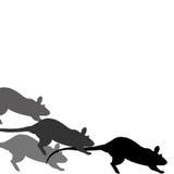 Het ras van de rat Royalty-vrije Stock Afbeeldingen