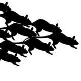 Het ras van de rat Stock Afbeeldingen