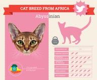 Het rasseninfographics van de Abyssiniankat vector illustratie