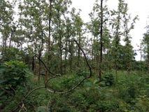 Het regenachtige teaser bos in Sri Lanka royalty-vrije stock fotografie