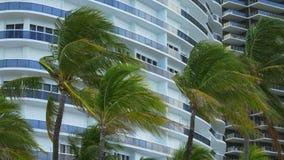 Het regenachtige van de de wind blazende palm van de de zomerdag strand 4k de V.S. van Miami stock videobeelden