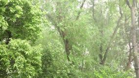 Het regenen in de wildernis stock video