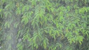 Het regenen hard met installaties en boombladeren op achtergrond stock videobeelden