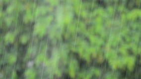 Het regenen met installaties en van boombladeren achtergrond stock video
