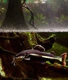 Het regenen op de rivier. Royalty-vrije Stock Foto