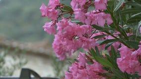 Het regenen over Roze Bloemen stock footage
