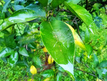 Het regenende water van de bladholding Royalty-vrije Stock Afbeelding