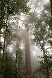 Het regenwoud Barron Gorge National Park queensland australi? stock afbeeldingen