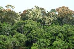 Het regenwoud van Amazonas Stock Afbeeldingen