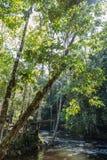 Het regenwoud van Amazonië Stock Foto's