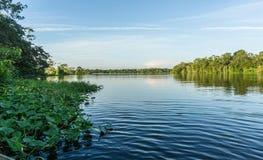 Het regenwoud van Amazonië Stock Afbeelding