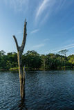 Het regenwoud van Amazonië Royalty-vrije Stock Afbeelding