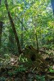 Het regenwoud van Amazonië Royalty-vrije Stock Foto's