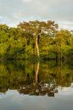 Het regenwoud van Amazonië Royalty-vrije Stock Afbeeldingen