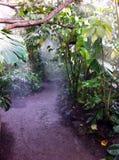 Het regenwoud van Amazonië Stock Foto