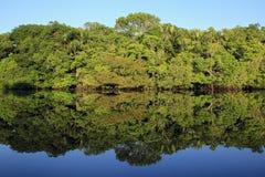 Het regenwoud van Amazonië Stock Afbeeldingen
