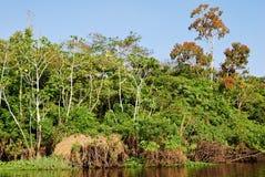 Het regenwoud van Amazonië: Landschap langs de kust van de Rivier van Amazonië dichtbij Manaus, Brazilië Zuid-Amerika royalty-vrije stock afbeelding