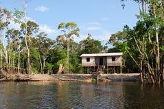 Het regenwoud van Amazonië: Landschap langs de kust van de Rivier van Amazonië dichtbij Manaus, Brazilië Zuid-Amerika Royalty-vrije Stock Foto's