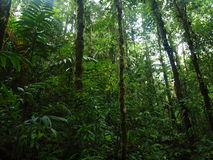 Het Regenwoud van Colombia Stock Afbeelding