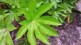 Het regenwoud van Florida Stock Fotografie