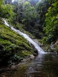 Het regenwoud van Lupamasa in Borneo Stock Foto