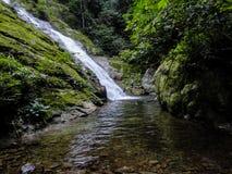 Het regenwoud van Lupamasa in Borneo Stock Fotografie