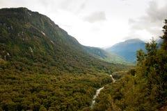 Het regenwoud van Nieuw Zeeland Stock Foto's