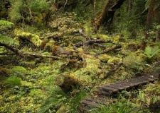 Het regenwoud van Nieuw Zeeland Stock Afbeelding