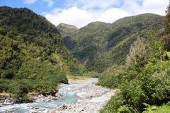 Het regenwoud van Nieuw Zeeland Royalty-vrije Stock Fotografie
