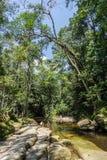 Het regenwoud van wildernisamazonië Royalty-vrije Stock Foto's