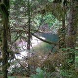 Het regionale Park van de Capilanorivier in de zomer stock foto