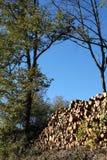 Het registreren Eiken Bomen stock foto's